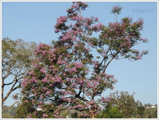 Coonoor Flower