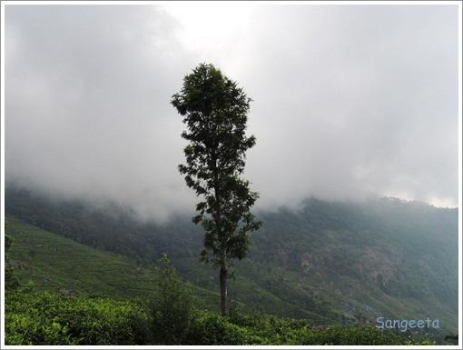 Coonoor Mist
