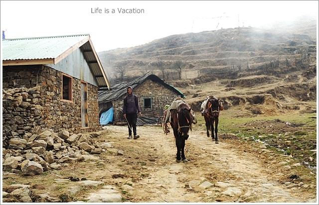 Sandakphu_Trek_Tonglu_Horse