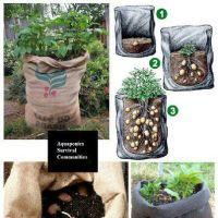 Два лучших способа выращивания картофеля без поражения паршой и колорадским жуком