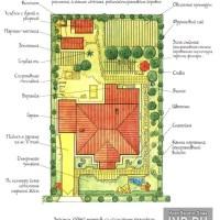 Размещение плодовых деревьев на участке  | Совместимость плодовых деревьев