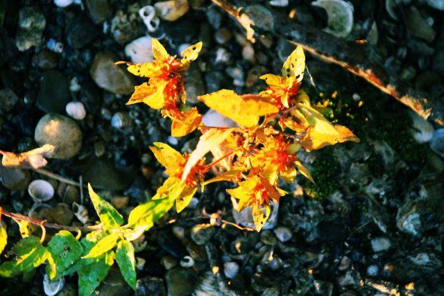 12-oct-16-wild-flower