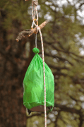 Image shows a green drawstring bag hanging from a branch.