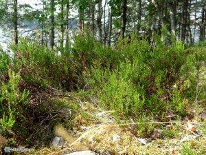 Трава на камнях