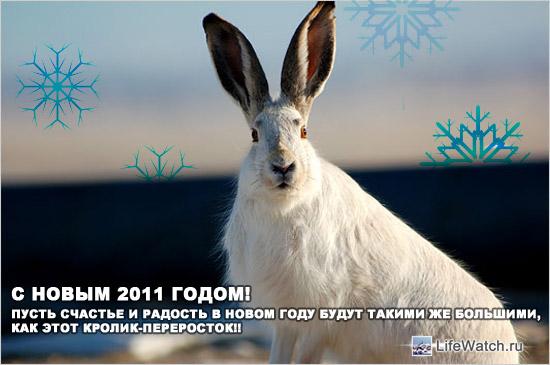 С Новым 2011 годом, друзья!