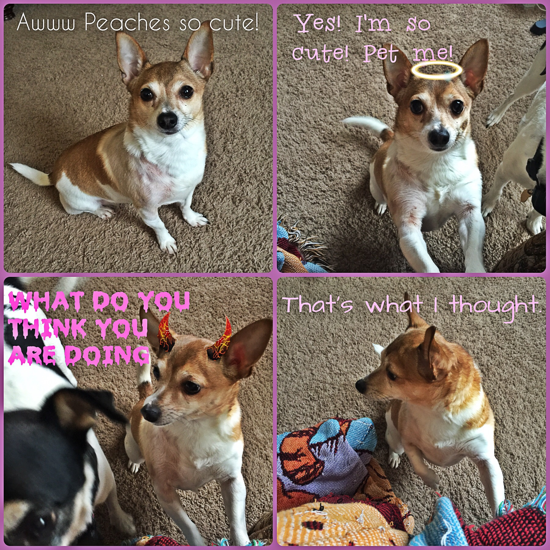 Flagrant Dogs 4 Letters Life Little Dog Syndrome Little Dog Syndrome Life Coffee Life Dogs Movie Dogs bark post Life With Dogs