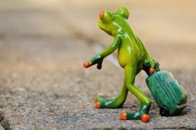 frog-897419_1280