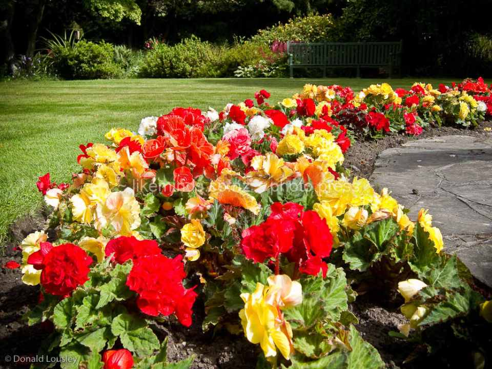Colourful Flower Beds in the Oamaru Public Gardens by Donald Lousley.