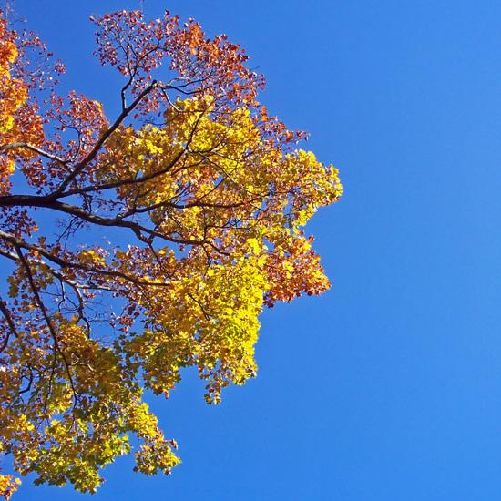 leaf55.jpg