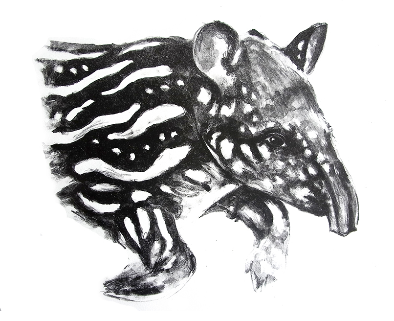 Tapir-malayo