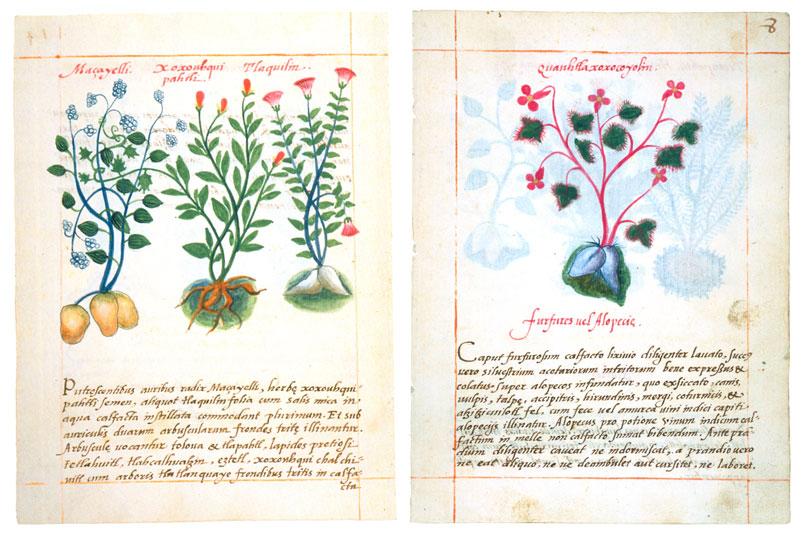 limulus_Libellus_Medicinalibus_Indorum_Herbis_1