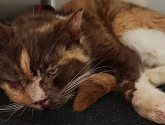 Cat put down after being mauled by savage dogs near Boston