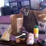 Tim Hortons lunch date with my cats and fiance.