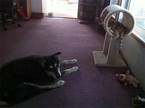 Loki and Poppy