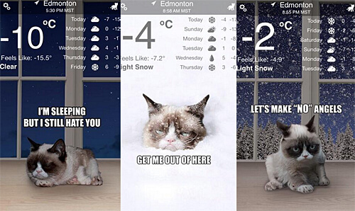 Forecast looks to be cloudy with a chance of kittens! The popular Weather Kitty app (featuring Grumpy Cat) was developed by Edmonton's own Shiv Takhar.