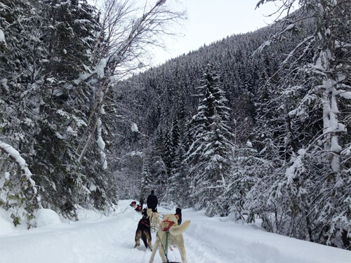 Recap: Dogsledding in the Canadian Rockies (Jasper/B.C.)