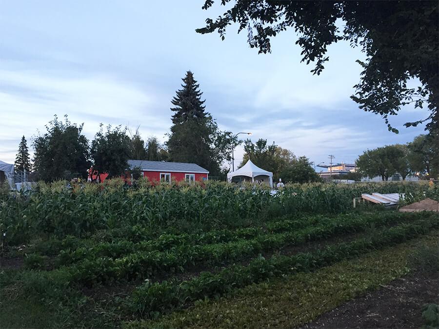 Edmonton Northlands Urban Farm – Farm Dinner – Alberta Farm Days