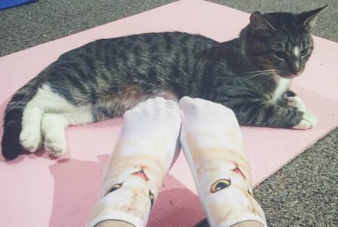 Cats on Your Mats - Cat Yoga - Edmonton Humane Society