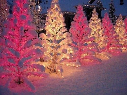 Rosa og hvite juletrær