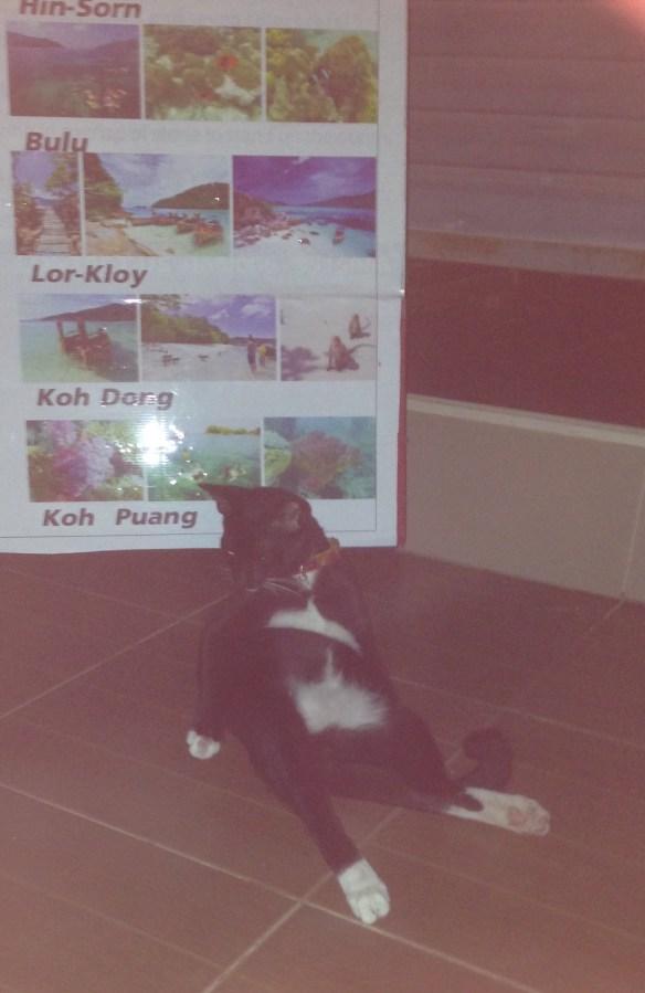 Walking Street Koh Lipe avslappet katt