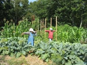 scarecrows in vegetable garden