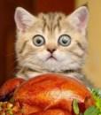 rp_awesomely-cute-kitten-1500-300x225.jpg