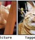 facebook-photo-cat-funny-lolcat-Favim.com-579456