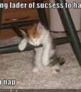 Lol-cats-success
