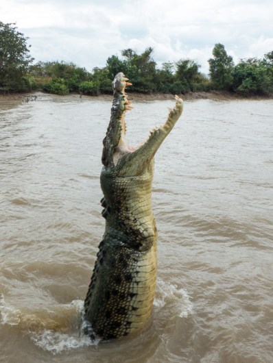 CROCTACULAR Jumping Crocs On The Adelaide River