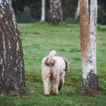 Truffle Hunting & Cooking in the Yarra Valley