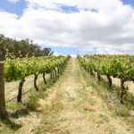 St Leonards Vineyard, Rutherglen