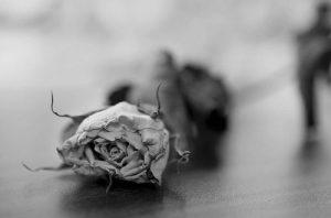 photo: yashna m. - flickr cc