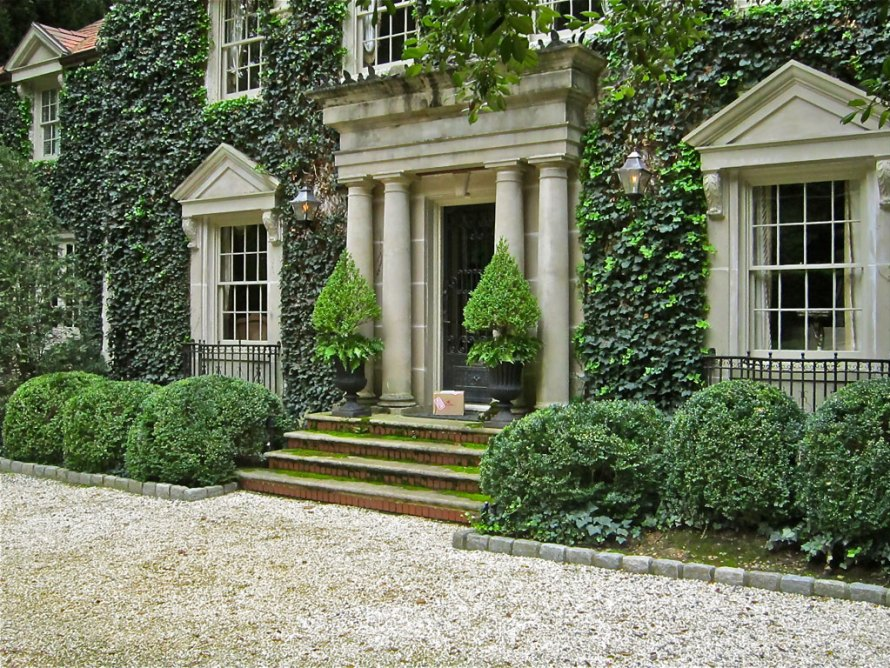 Boxwoods garden and home