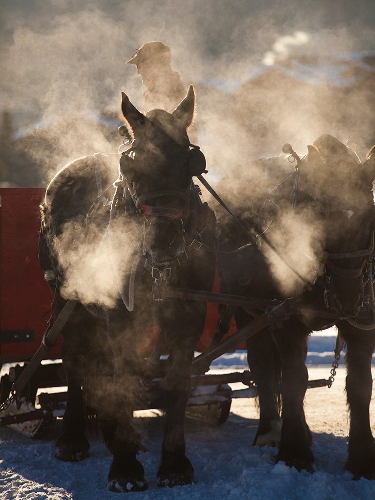 Enjoy the Season—and the sleigh ride