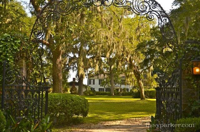 Boxwood and Live oaks line this entry drive and garden