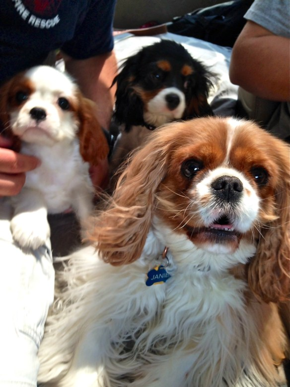 Janie and her new crew—Lilly and Gracie