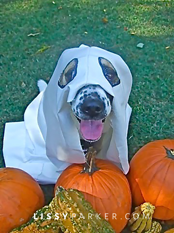 Happy Halloween dog in ghost costume