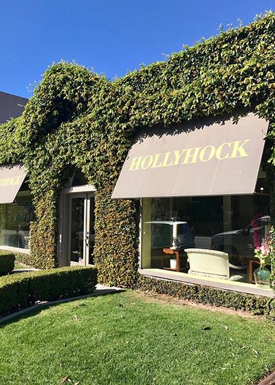 Holllyhock