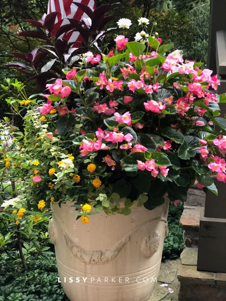pink container garden