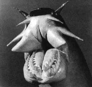 458373-Hagfish