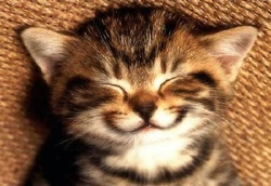 Smile Cat