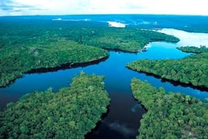 La Br Amazon 461