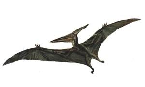 Pterosaur Big Old