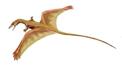 Sharovipteryx Bw