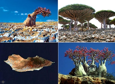 Socotra Island