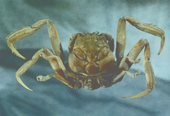 02Hikecrab