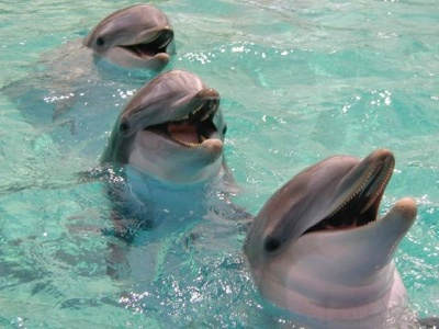 Dolphin.1
