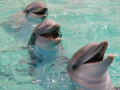 Dolphin.1