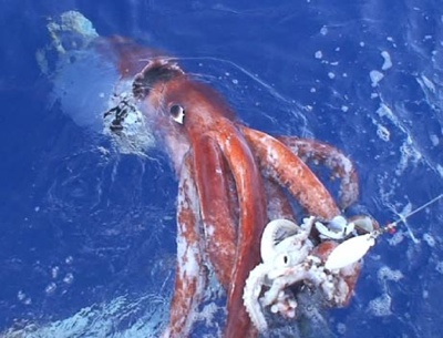 061222-Giant-Squid