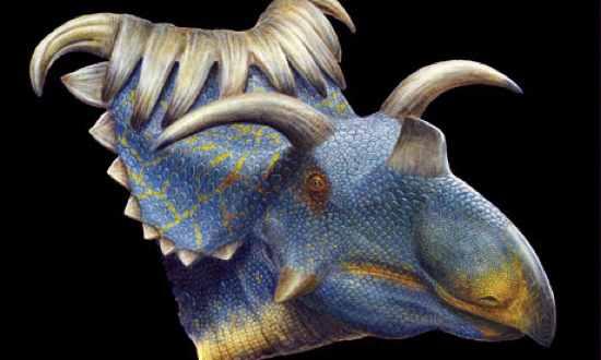 Kosmoceratops-Horned-Dino-008